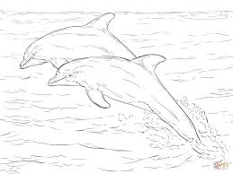 two atlantic bottlenose dolphins coloring page free printable