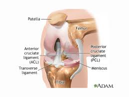 Anatomy Of The Knee Torn Meniscus Treatments Physical Therapy Just As Good As Surgery