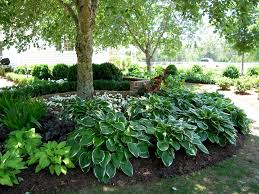 Small Shrubs For Front Yard - landscaping ideas for small slopes full shade garden ideas
