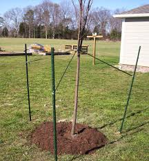 tree stakes steps in planting a tree