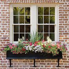 Metal Window Boxes For Plants - window boxes ideas