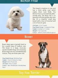 boxer dog feet dog breeds infographics visual ly
