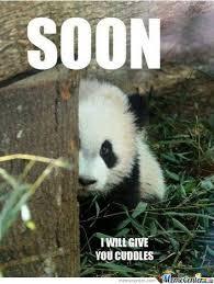 Shy Meme - don t be shy by lev123 meme center