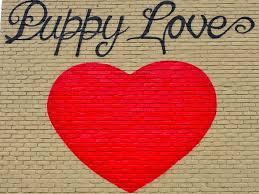 lexus of austin coffee bar puppy love 2015 e riverside exploring austin u0027s street art