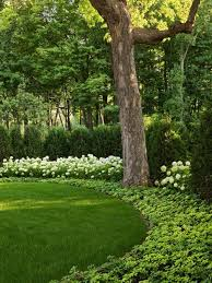 Backyard Landscaping Ideas For Privacy Privacy Landscaping Ideas Houzz