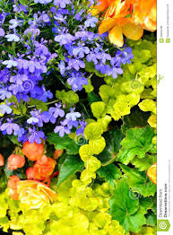 cottage garden flowers cottage garden flowers background stock photo image 56696786