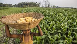 gm global service desk gm crops bounce back with gains in production areas scidev net