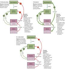 Endocrine System Concept Map 13 3 Human Reproduction Concepts Of Biology 1st Canadian Edition