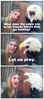 Freedom Eagle Meme - how to take selfies with a bald eagle fixed funny