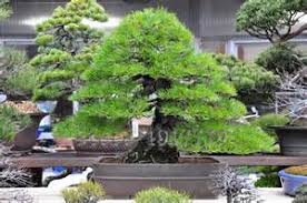 popular bonsai tree ornaments buy cheap bonsai tree ornaments lots
