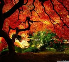 symbolism trees tree symbolism and meanings of trees