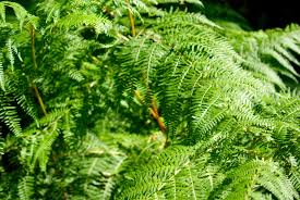 Free Picture Leaf Nature Fern Free Images Tree Nature Branch Leaf Flower Moss Green