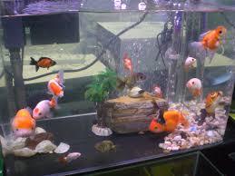file hk aquarium plaza quarry bay goldfish society jpg wikimedia