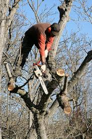 why tree work is so expensive not always on