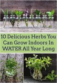 indoor herb garden kits to grow herbs indoors hgtv indoor herb garden kit australia inspirational how to grow herbs