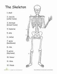 free skeletal system worksheets worksheets for kids human body