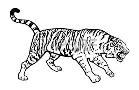 tiger eye drawing free download clip art free clip art on