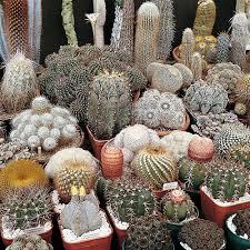 house plants thompson u0026 morgan