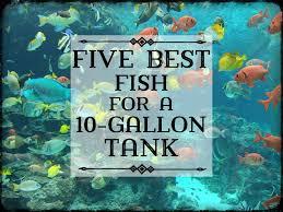 best fish for a 10 gallon tank setup pethelpful
