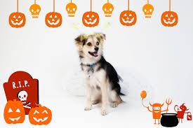 boo enter the cutest halloween contest ever rover blog