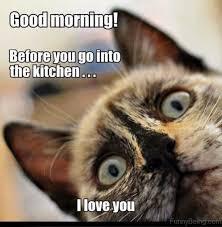 Good Morning Cat Meme - 80 fresh good morning memes