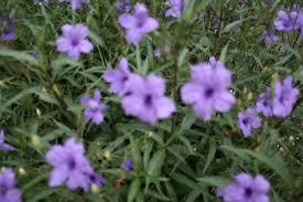 arizona flowers photos of flowers