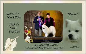 american eskimo dog washington state angelheart eskies american eskimo dogs seven u0027s page