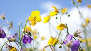 youwall spring flowers wallpaper wallpaper wallpapers free