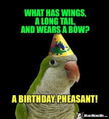 Funny Bird Memes - bird days are funny happy birthday bird humor hilarious parrot b