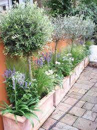 best 25 patio trees ideas on garden lighting