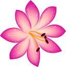 Bloggang.com : เนยสีฟ้า : 48 - ดอกไม้ สีชมพู , ม่วง