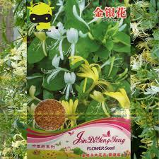 online buy wholesale honeysuckle seeds from china honeysuckle