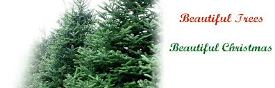 christmas tree prices christmas tree wreath sale benefits school waterville valley real