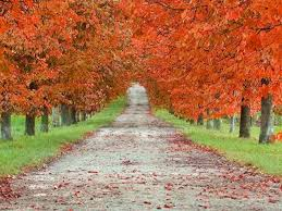 fall autumn the most beautiful places to travel this fall autumn travel