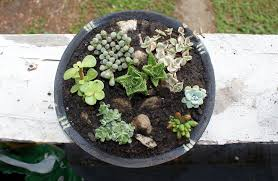 Garden Gift Ideas Diy Container Succulent Garden Last Minute S Day