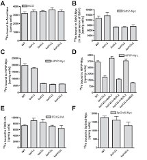 mitochondrial bol1 and bol3 function as assembly factors for