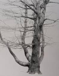 cfbd824b33abd44948eaf22418bd1604 jpg 2 179 2 799 pixels tree
