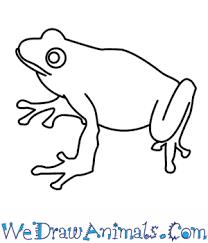 coloring good simple frog drawing thumb coloring