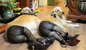 High Dog Meme - dogs wearing pantyhose a popular new meme in china