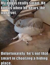 Dog Vet Meme - my dog is really smart he knows when he hears the word vet