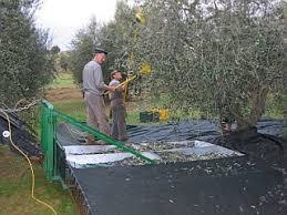 cassette per raccolta olive macchine per stesura e recupero reti per raccolta olive