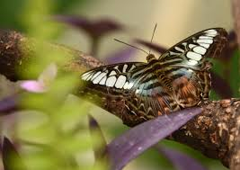 mammadaba tērvete butterfly house