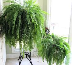 low light houseplants plants that don t require much light best 25 low light houseplants ideas on pinterest indoor plants 20
