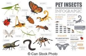 kasten ältest wanzen auf haus stockfoto bild kasten spinnen clipart vektor grafiken 21 338 spinnen eps clip vektor