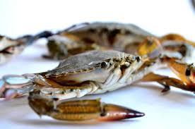 free picture crab animal macro