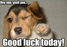 Good Luck Cat Meme - good luck today hey you yeah you winking pointing puppy