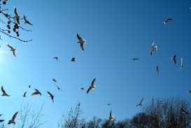 how to get dead birds out of a chimney most popular chimney and