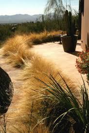 landscape design with ornamental grasses az landscape creations