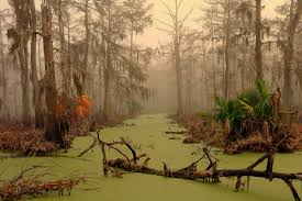 Louisiana scenery images Shouting into the void scenery swamp jpg