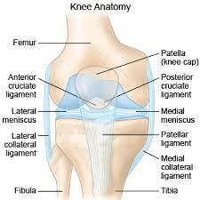 Knees Anatomy Knee Sprain How To Treat A Sprained Knee